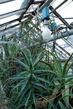 Estufa do Succulent Fotografia de Stock Royalty Free