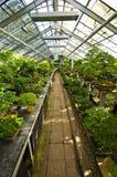 Estufa dos bonsais em Walbrzych, Polônia imagens de stock royalty free