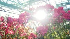 Estufa ensolarada com flores de florescência filme