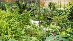 Estufa Fria (det kalla växthuset), Lissabon, Portugal Royaltyfri Foto