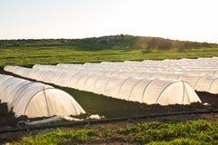 Estufa pequena branca no jardim do país na mola Foto de Stock
