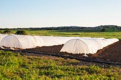Estufa pequena branca no jardim do país na mola Imagem de Stock Royalty Free