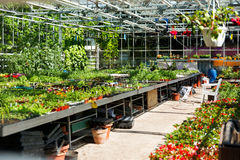 estufa Plantas diferentes, flores, plântula, adubo Fotografia de Stock