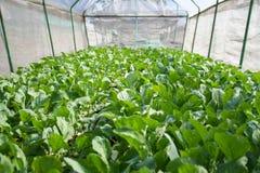Estufa vegetal Foto de Stock