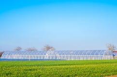 Estufas no campo para plântulas das colheitas, frutos, vegetais, emprestando aos fazendeiros, terras, agricultura, áreas rurais,  fotos de stock royalty free