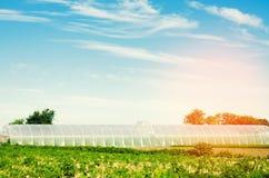 Estufas no campo para plântulas das colheitas, frutos, vegetais, emprestando aos fazendeiros, terras, agricultura, áreas rurais,  foto de stock