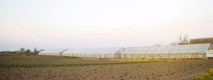 Estufas no campo para plântulas das colheitas Vegetais org?nicos crescentes Empréstimo aos fazendeiros Agricultura das terras agr imagem de stock