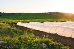 Estufas no jardim do país na mola Imagem de Stock Royalty Free