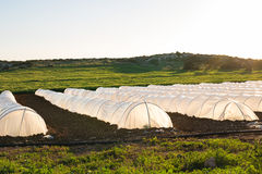 Estufas no jardim do país na mola Fotos de Stock