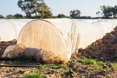Estufas no jardim do país na mola Imagens de Stock Royalty Free