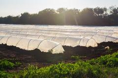 Estufas no jardim do país na mola Fotos de Stock Royalty Free