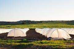 Estufas no jardim do país na mola Imagem de Stock