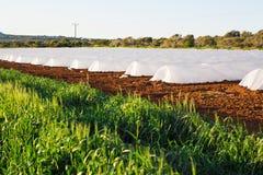Estufas no jardim do país na mola Fotografia de Stock