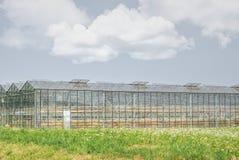 Estufas para vetetables crescentes com colheita seca imagens de stock royalty free