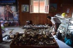 Esvakasi sites discovery of extinct animals stock photo