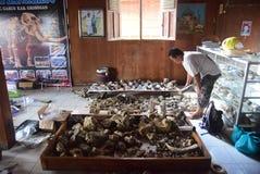 Esvakasi sites discovery of extinct animals stock image