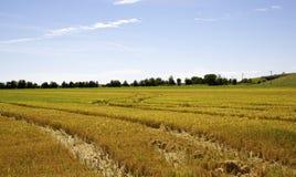 Esvazie a colheita no meio do campo Fotos de Stock