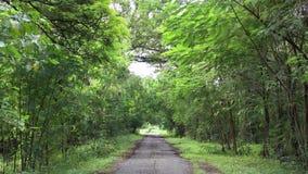 Esvazie a estrada rural alinhada com a paisagem das árvores que fazem sinal pelo vento video estoque