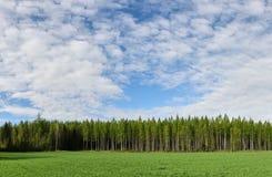 Esvazie o campo com floresta e lotes do espaço no verão Fotografia de Stock Royalty Free