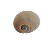 Esvazie o caracol do shell fotos de stock