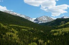 Esverdeia árvores com fundo montanhoso nevado Fotografia de Stock