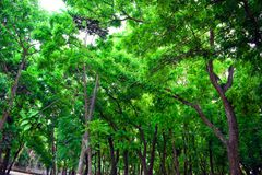 Esverdeie a árvore com folhas foto de stock royalty free