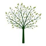 Esverdeie a árvore com folhas Ilustração do vetor ilustração stock