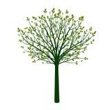 Esverdeie a árvore com folhas Ilustração do vetor ilustração royalty free