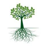 Esverdeie a árvore com folhas Ilustração do vetor ilustração do vetor
