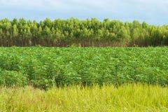 Esverdeie acres Fotografia de Stock