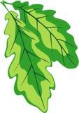 Esverdeie as folhas Imagens de Stock Royalty Free