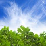 Esverdeie as folhas, céu azul Imagens de Stock