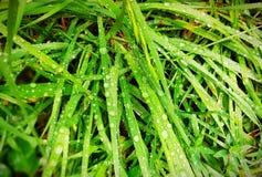 Esverdeie as folhas com gotas da água imagens de stock