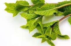 Esverdeie as folhas de hortelã Foto de Stock