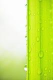 Esverdeie as folhas e a gota da água fotos de stock