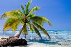 Esverdeie as palmas em uma praia branca da areia Fotos de Stock Royalty Free