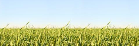 Esverdeie a erva e o céu imagem de stock royalty free