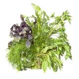 Esverdeie especiarias frescas fotografia de stock royalty free