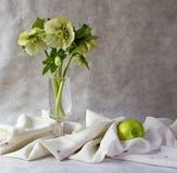 esverdeie a flor da mola da maçã   foto de stock royalty free
