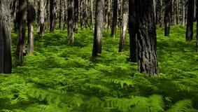 Esverdeie a floresta foto de stock