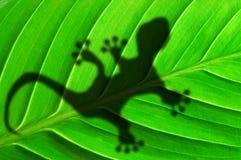 Esverdeie a folha e o gecko da selva imagens de stock royalty free