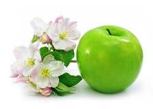 Esverdeie a fruta da maçã isolada com flores cor-de-rosa imagens de stock royalty free
