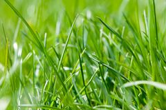 Esverdeie a grama fresca da mola Fotos de Stock