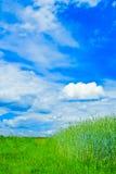 Esverdeie o campo - paisagem Fotografia de Stock