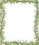 Esverdeie o frame floral ou a beira Fotos de Stock