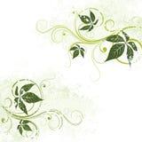 Esverdeie o fundo floral ilustração stock
