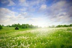 Esverdeie a paisagem do campo Fotos de Stock Royalty Free