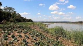 Esy uppehälle för tillräckligt liv trädgårds- grönsak arkivfoto