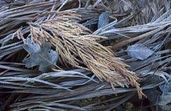 Or et herbe et feuilles givrées par Brown photographie stock