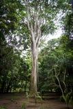 Et un arbre géant parmi et un jardin botanique Image stock
